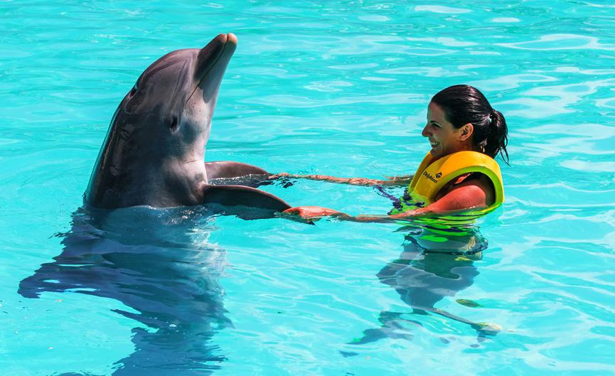 nadando com os golfinhos