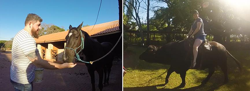 Alimentando o cavalo e andando de búfalo
