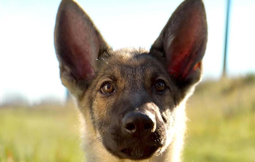 Ellie, a cão-policial
